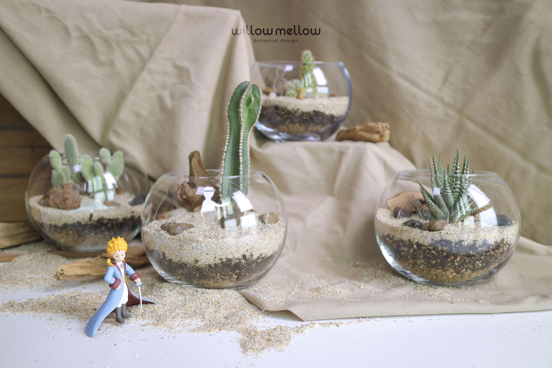 지구별 여행자가 만나는 사막 식물 - 테라리움 키트